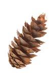 Конус сосенки (menziesii Pseudotsuga) Стоковые Изображения