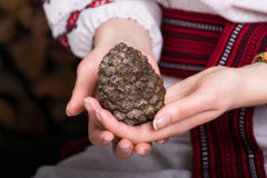 Конус сосны в руках девушки Стоковое Фото