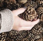 Конус сосны в руке ` s женщины для настоящего момента или украшения рождества diy Стоковая Фотография