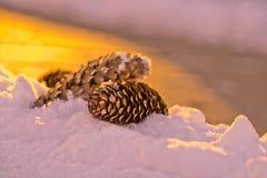 Конус сосны на снеге - фотографии макроса Стоковая Фотография RF