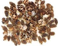 Конус состава картины предпосылки естественный на белизне взгляд сверху текстура флористического дизайна Стоковая Фотография