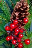 Конус & ягоды сосны стоковое изображение rf