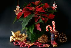 Конфета рождества Стоковые Фотографии RF