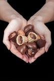 Конфеты шоколада в женских ладонях Стоковое Изображение RF