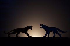Конфликт концепции Тигр против силуэта волка стоковая фотография rf