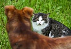 Конфликт кота и собаки Стоковые Фотографии RF