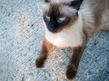 Конца-вверх кота тем действия кот отечественный, кот животного милый действия стоковое фото