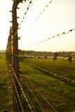 концентрация лагеря birkenau auschwitz Стоковые Фото