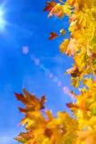 Концепции природы Кленовые листы осени желтые красные помещенные как рамка против предпосылки голубого неба Темы падения Стоковое фото RF
