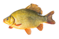 Концепции рыб Стоковое Изображение RF