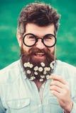 Концепция весеннего времени Гай смотрит славно с цветками маргаритки или стоцвета в бороде Человек с длинными бородой и усиком стоковая фотография
