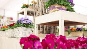 Концепция весеннего времени сада, женщина флориста вручает работу с белыми цветками плетеной корзины сток-видео