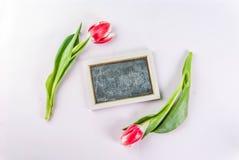 Концепция весны с тюльпанами Стоковые Фотографии RF