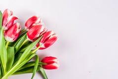 Концепция весны с тюльпанами Стоковая Фотография