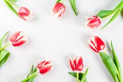 Концепция весны с тюльпанами Стоковое Изображение
