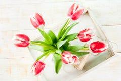 Концепция весны с тюльпанами Стоковое Изображение RF