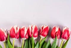 Концепция весны с тюльпанами Стоковые Изображения