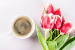 Концепция весны с тюльпанами Стоковые Фото