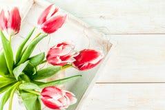 Концепция весны с тюльпанами Стоковая Фотография RF
