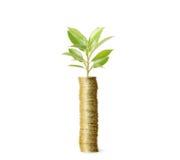 Концепция вклада, рынок монеток Стоковое Изображение