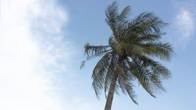 Концепция голубого неба хобота загиба кокосовой пальмы Стоковое Фото