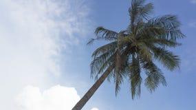 Концепция голубого неба хобота загиба кокосовой пальмы Стоковая Фотография