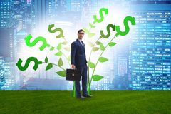 Концепция дерева денег с бизнесменом в растя выгодах стоковые фотографии rf