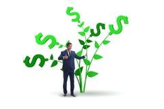 Концепция дерева денег с бизнесменом в растя выгодах стоковое фото
