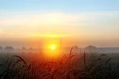 Концепция дня мировой окружающей среды: Спокойствие предпосылки ландшафта восхода солнца луга страны стоковые изображения