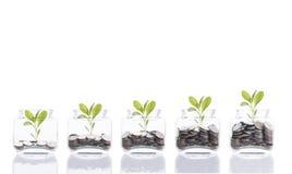 Концепция денег сбережений, рука дела кладя дерево стога монетки денег растущее на копилку