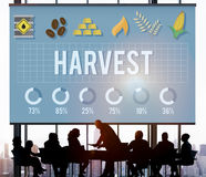 Концепция естественной природы фермера земледелия сбора зрелая Стоковые Фотографии RF