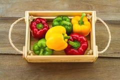 Концепция жизни все еще †«красочная свежего сладостного болгарского перца (capsicum) Стоковое Изображение RF