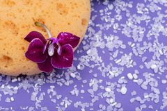 Концепция здоровья спа Естественные ванна пены & губка моря ливня, цветок орхидеи и соль Epsom лаванды на ярком пурпуре стоковое изображение