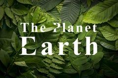 Концепция земли планеты одичалой зеленой листвы джунглей Стоковая Фотография RF