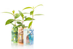 Концепция зеленого растения растет на примечании валюты ЕВРО Стоковые Изображения