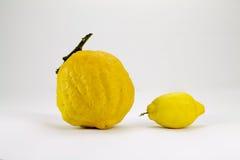 Концепция лимона и кедра, маленьких и больших Стоковая Фотография