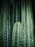 Концепция кактуса стоковые изображения rf