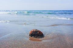Концепция каникул моря лета, раковина моря на sanly пляже Стоковое Изображение RF