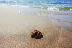 Концепция каникул моря лета, раковина моря на sanly пляже Стоковое Фото