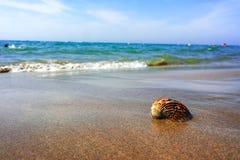 Концепция каникул моря лета, раковина моря на sanly пляже Стоковые Фотографии RF
