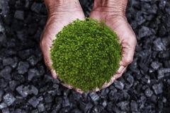 Концепция консервации окружающей среды: дерево, завод в руках человека стоковая фотография