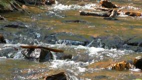 Концепция красивой заводи водопада естественная акции видеоматериалы