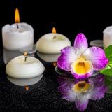 Концепция курорта фиолетового dendrobium орхидеи, зеленых лист с росой и Стоковая Фотография