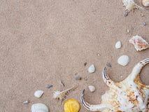 Концепция летнего отпуска и каникул Seashells на песке Море summ стоковое изображение