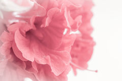 Концепция макроса конспекта стиля звуков сладостная флористическая для думая стиля справедливо Стоковое Фото