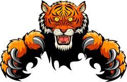 Концепция нападения тигра стоковое фото