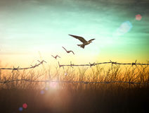 Концепция независимости и свободы Стоковая Фотография