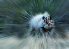 Концепция носорога Анти--крадя Стоковые Фотографии RF