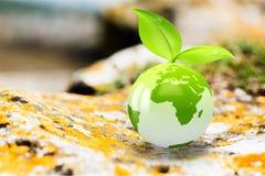 Концепция окружающей среды, стеклянный глобус и листья зеленого цвета Стоковое Изображение