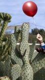 Концепция опасности, кактус может хлопнуть воздушный шар Стоковые Изображения RF